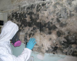mold-inspector-namp-certification